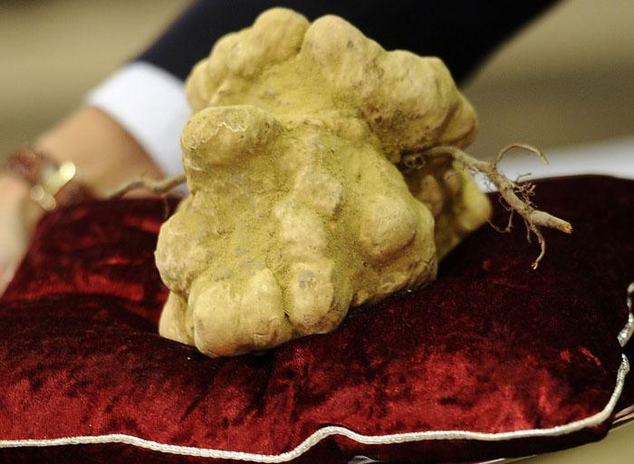 14-white-truffles-105-million.w700